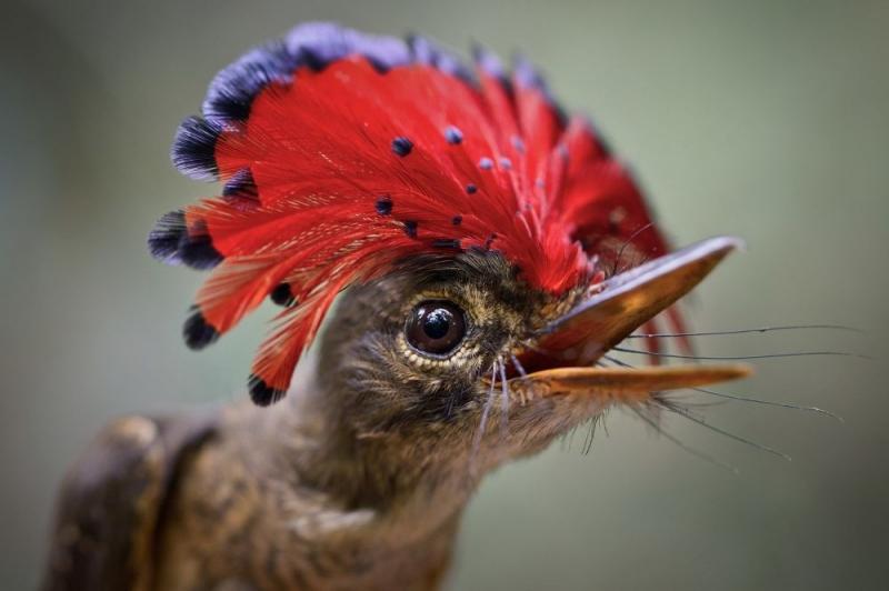 Sıradışı görünümüyle dikkat çeken egzotik kuş türleri