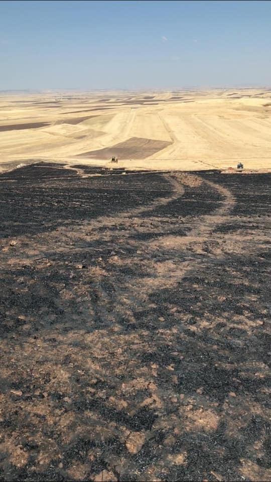 250 dönüm ekili alan yandı