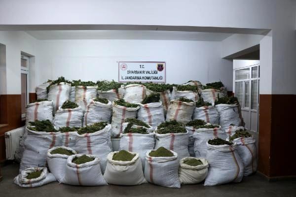 4,5 milyonun üzerinde kök kenevir 800 kg esrar ele geçirildi