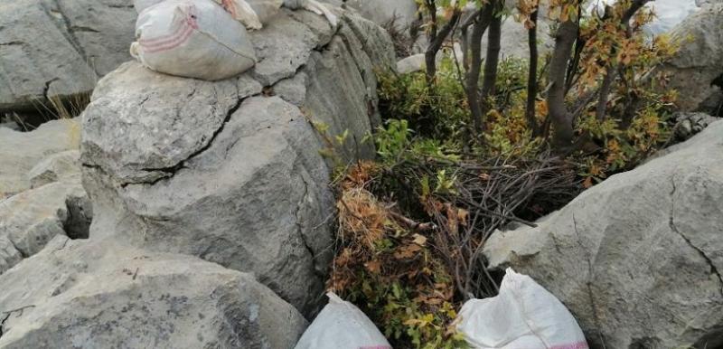 835 kilogram toz esrar ele geçirildi