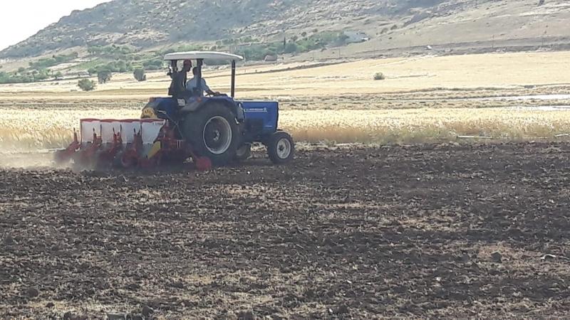 Buğday hasadı bitti, sıra mısırda