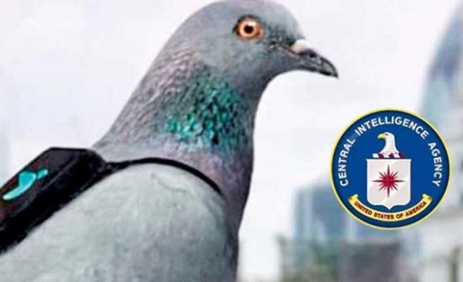 CIA'in hayvan casusları!