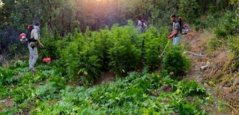 Diyarbakır'da son yılların en büyük uyuşturucu operasyonu