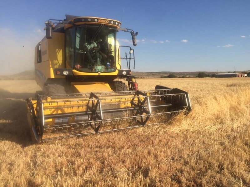 Ergani'de buğday hasadı