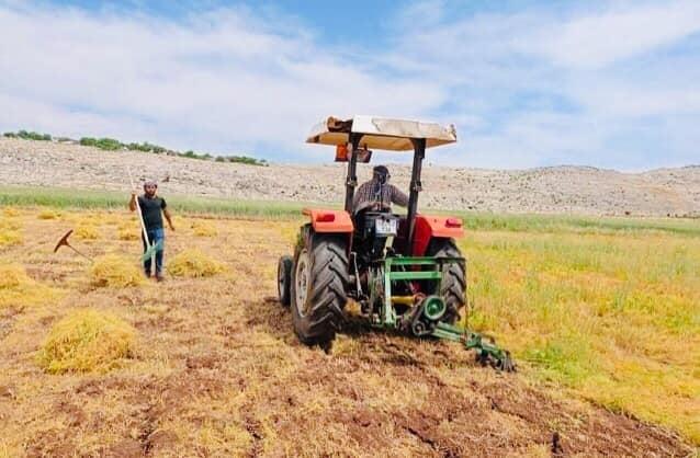 Ergani'de mercimek hasadı başladı