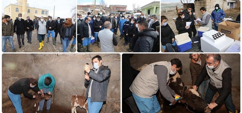 Ergani'de şap aşılama programı başladı