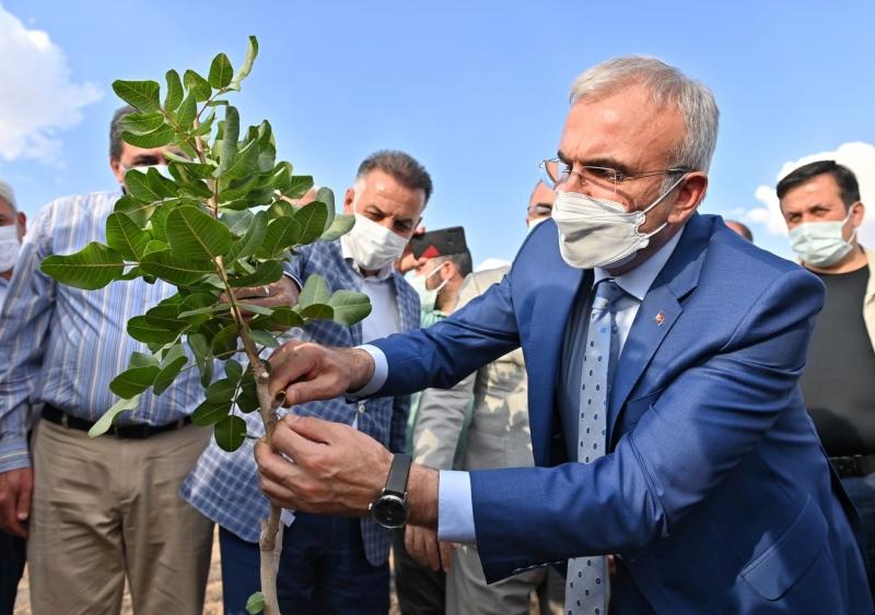 Karaloğlu, 28 bin ağaçlık fıstık aşılama kampanyasını başlattı