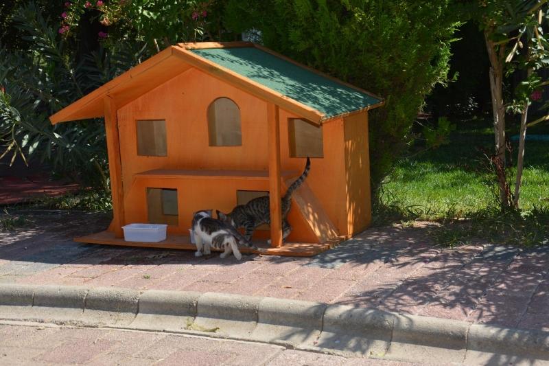 Sokak kedileri ev sahibi oldu