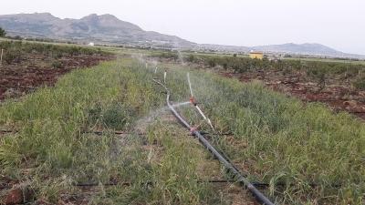 Ergani Barajı sulamasında 18 bin 660 dekar alan sulamaya açıldı