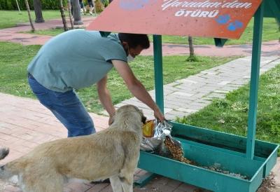Ergani Belediyesi ekipleri sokak hayvanlarını unutmadı