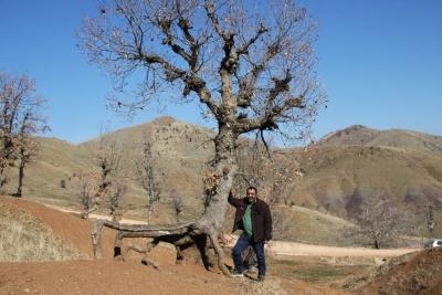 Ergani'de Doğanın Büyüsü Yürüyen Ağaçlar