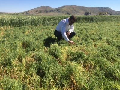 Ergani'de fırtına tarım alanlarına zarar verdi