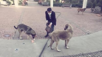 Ergani'de, sokak kısıtlamasında can dostları unutulmadı