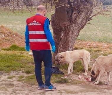 Ergani'de tam kapanma sürecinde sokak hayvanları unutulmadı