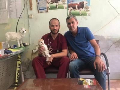 Ergani'de Yaralı bulunan peçeli baykuş tedaviye alındı