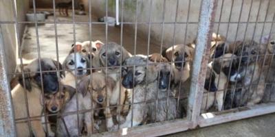 Ergani'de yavru köpekler için bir siteye kesilen ceza tüm site sakinlerine pay edildi