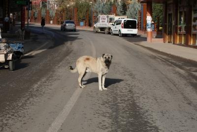 Sokağa çıkma kısıtlamasında cadde ve sokaklar boş kaldı
