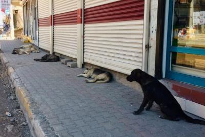 Sosyal mesafeyi korumada insanlardan daha başarılı olan köpekler
